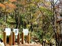 認定の森|森林セラピー総合サイト